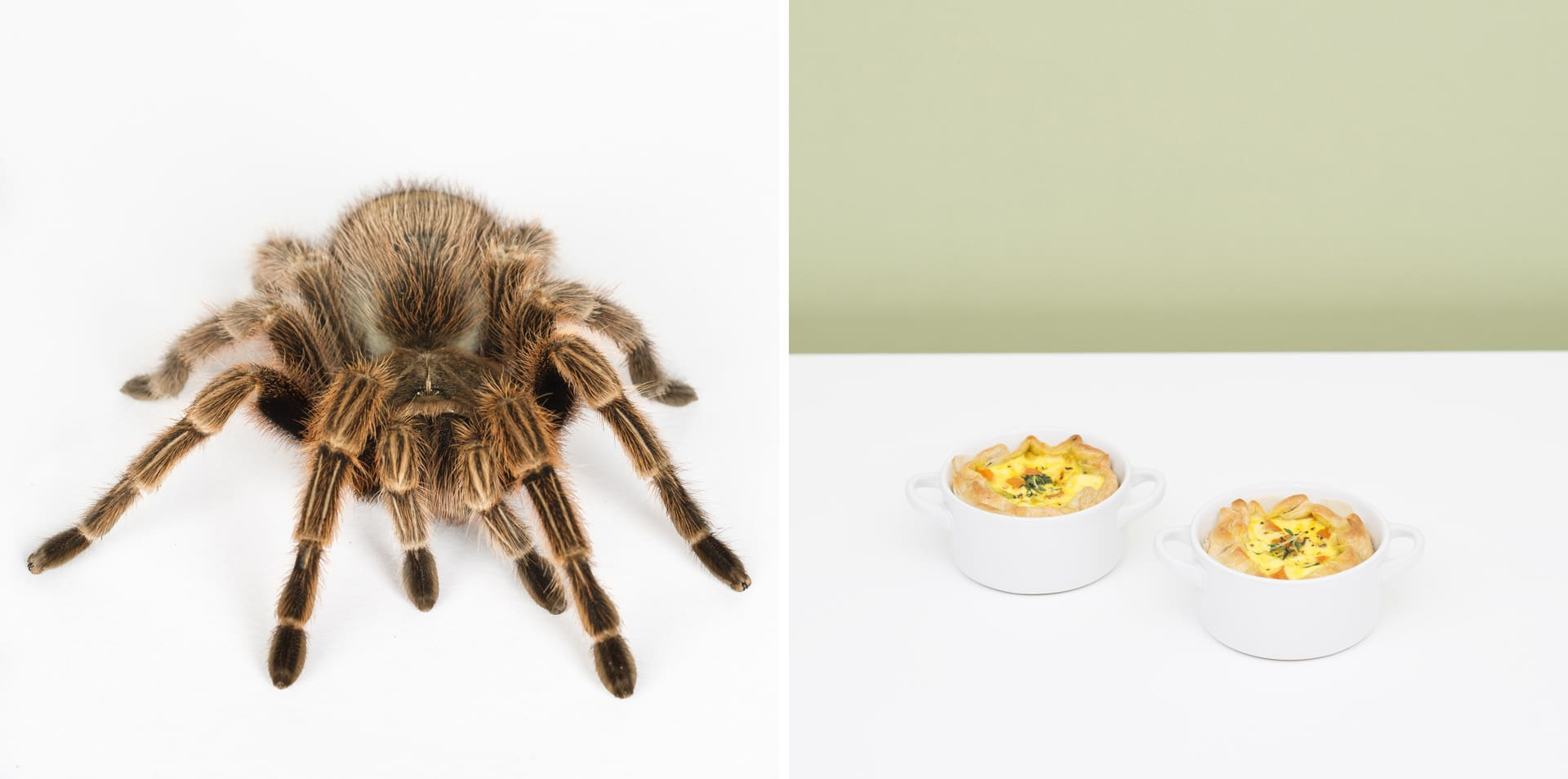 Baked vegetable cupcakes with dried tarantula