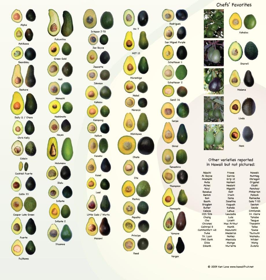 original avocado infografica