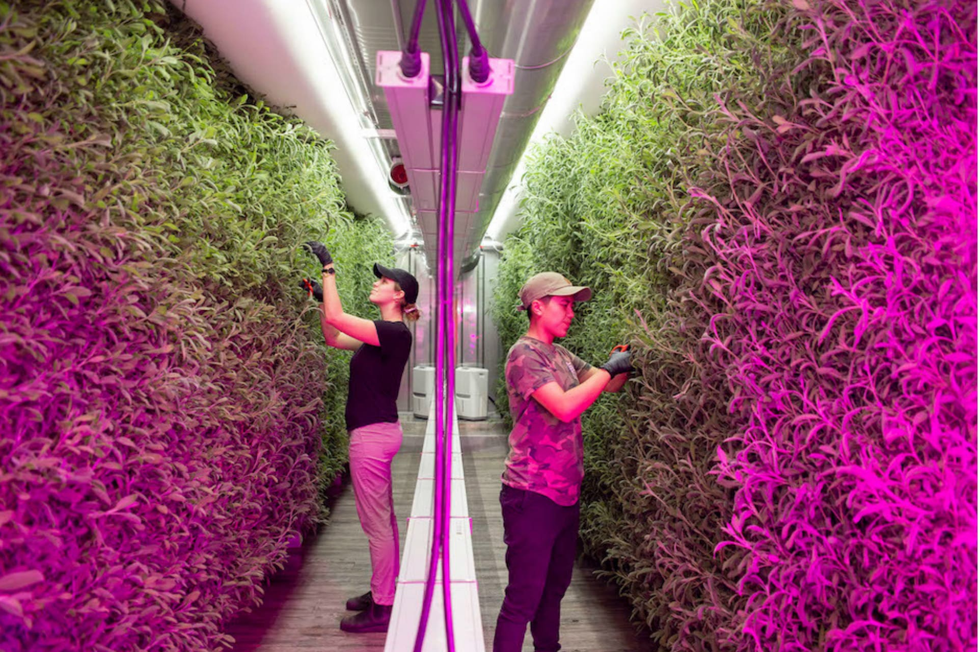 Kimbal Musk S Square Roots Aims To Transform Farming