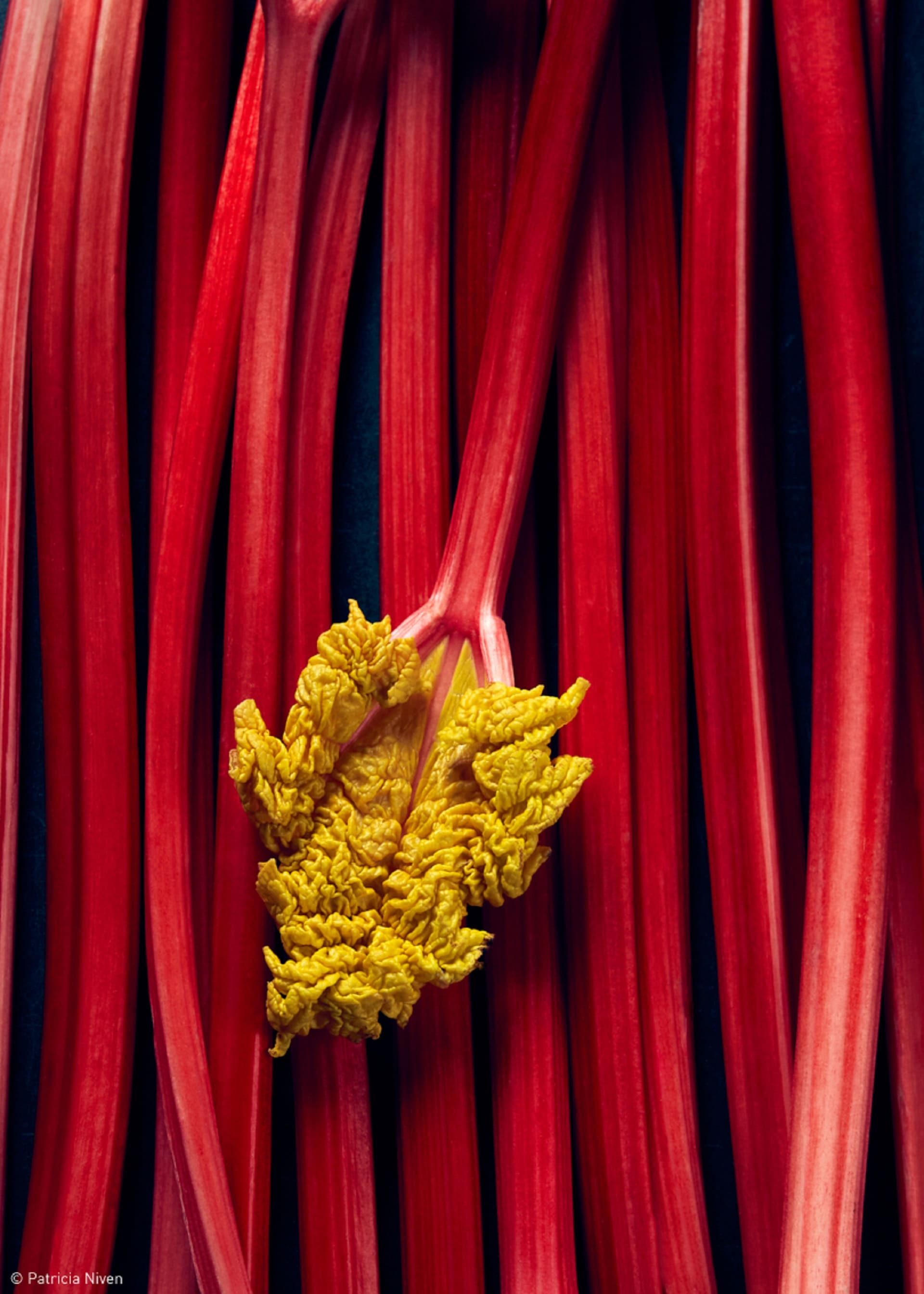 Production Paradise Previously Published - Rhubarb by Patricia Niven