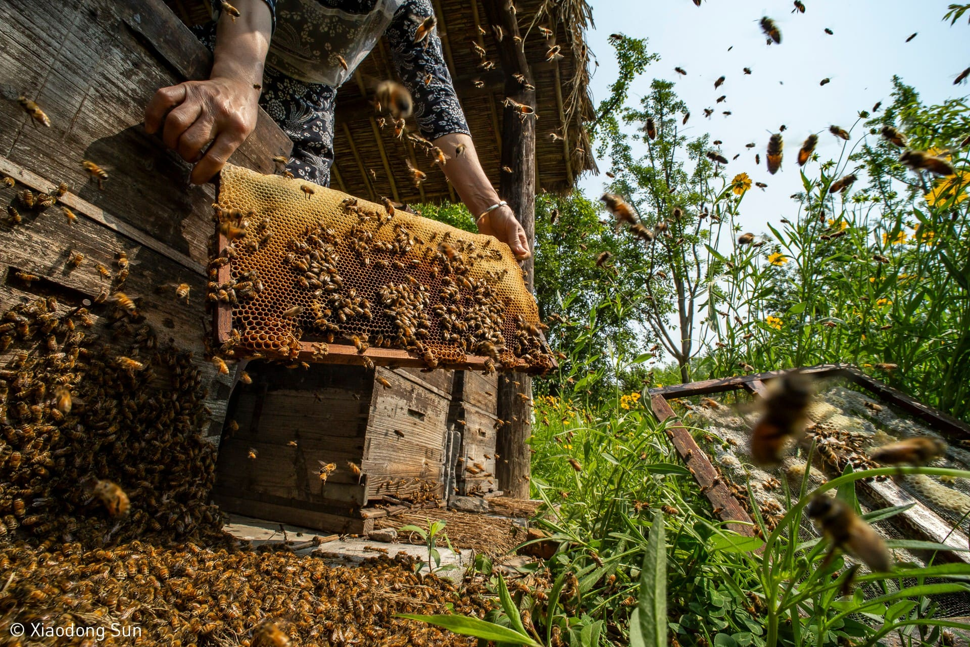 Food in the Field - When the Hive is Filled by Xiaodong Sun