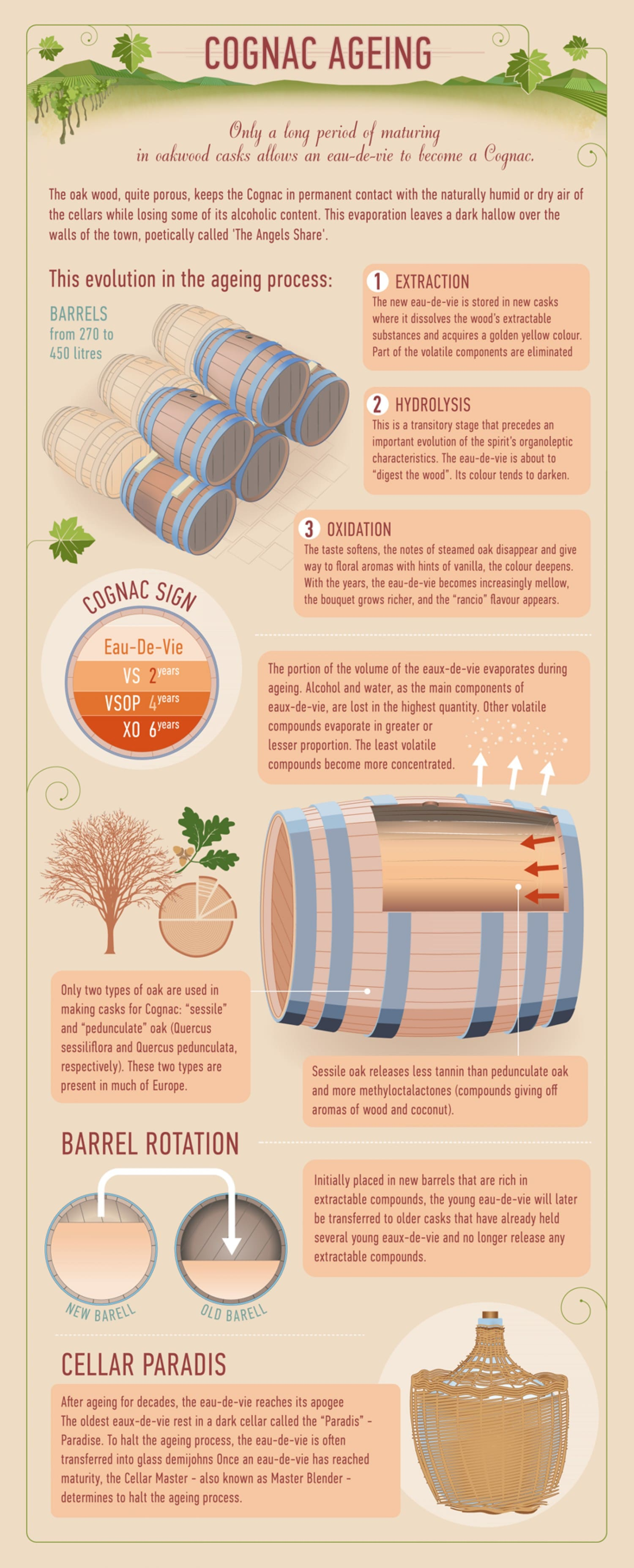 Find Out How Cognac Is Made