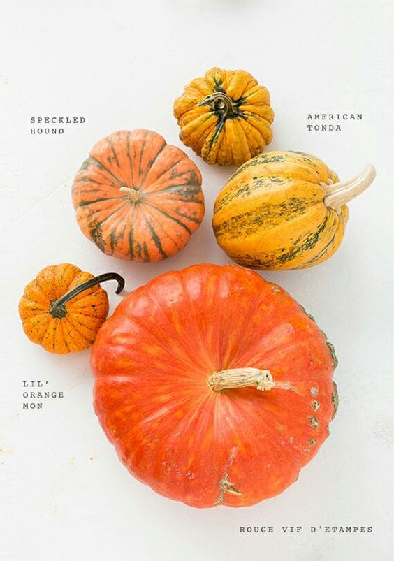 """""Different Squashes"