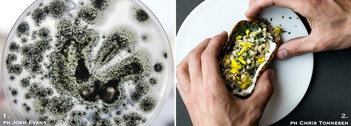 Aspergillus niger fungus | Bee larvae taco with nixtamalised Øland wheat tortilla