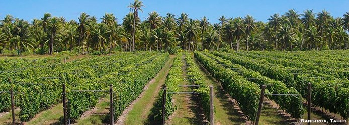 Extreme Vineyards: Rangiroa Tahiti Vineyards