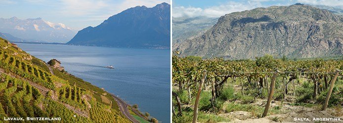 Lavaux Switzerland | Salta Argentina Vineyards