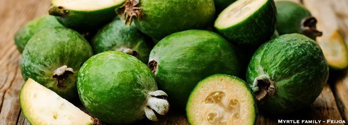 Guava Nutrition Facts | Myrtle family Feijoa