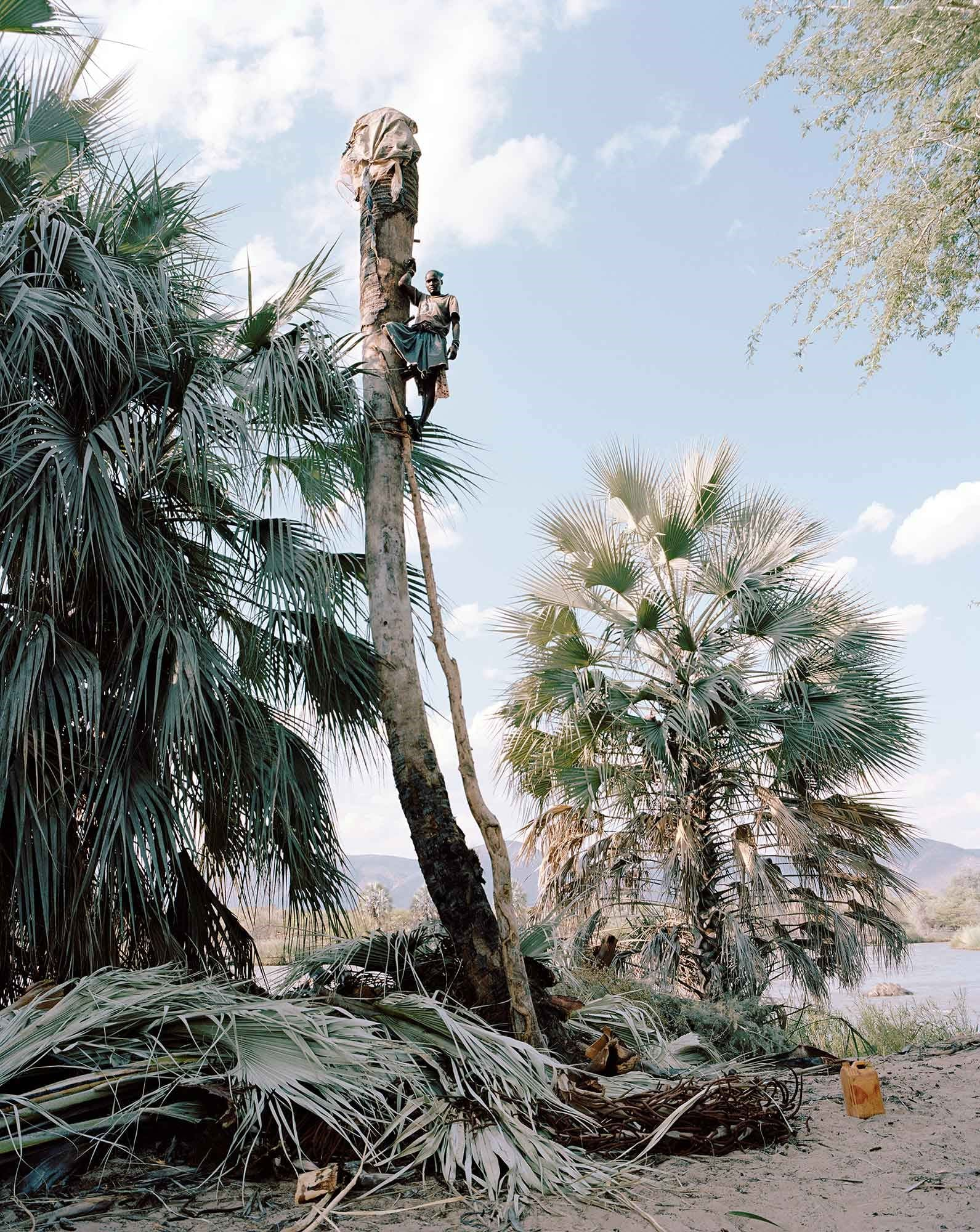Mutjope Kavari, Wine Palm Collector by Kyle Weeks
