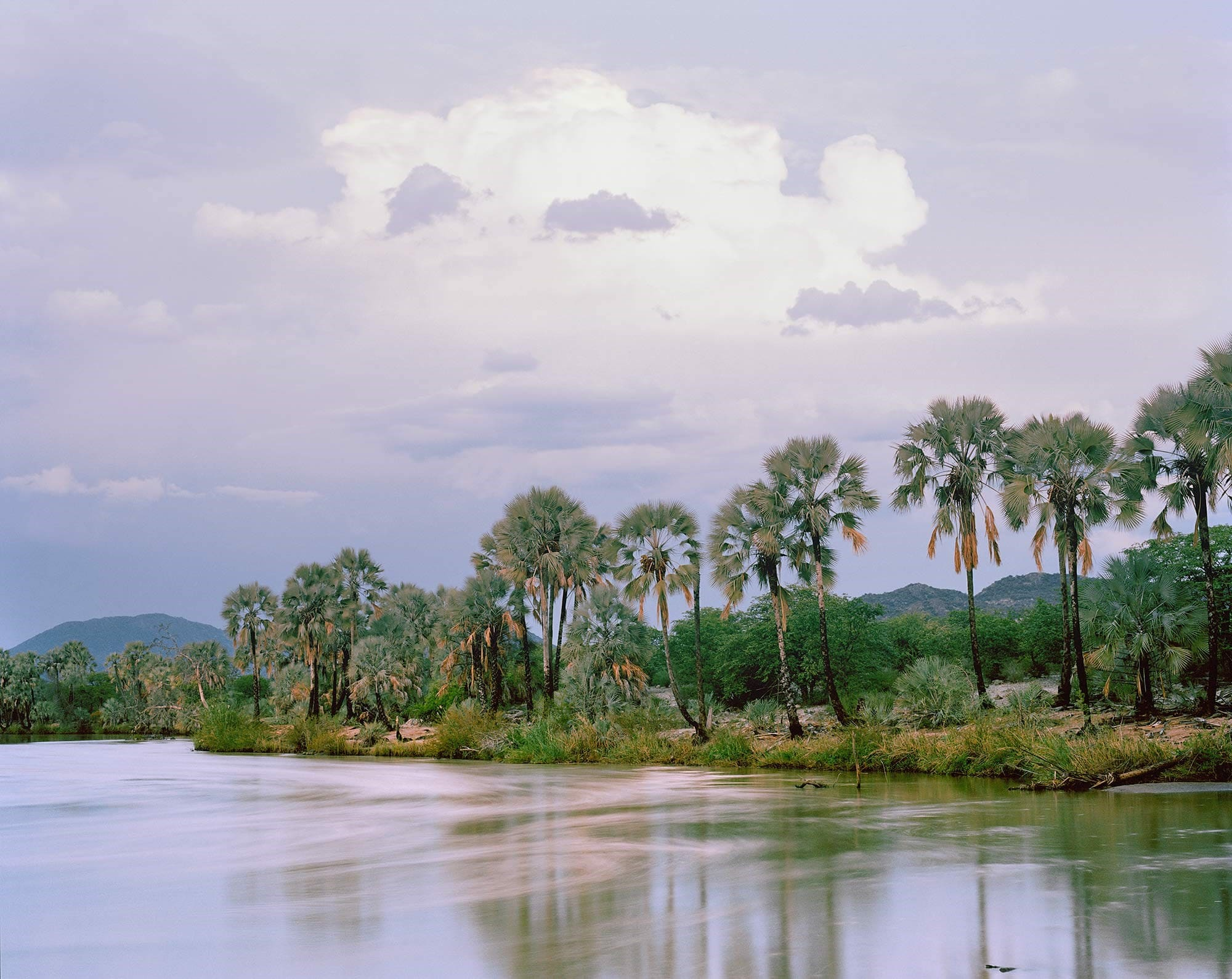 Kunene River, Wine Palm Collector by Kyle Weeks