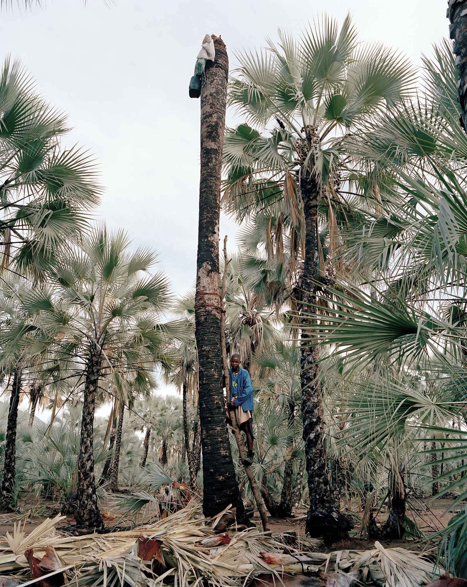 Marupuho Tjiposa, Wine Palm Collector by Kyle Weeks