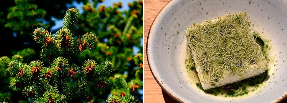 Pine needles | Thomas Frebel's dish