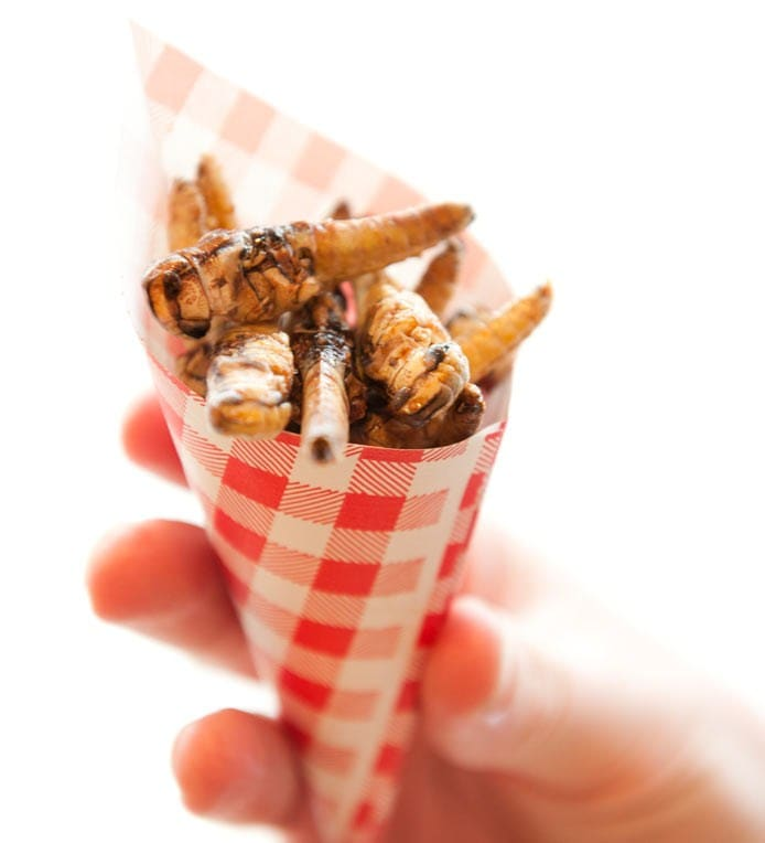 Insect Recipes | Grasshoppers