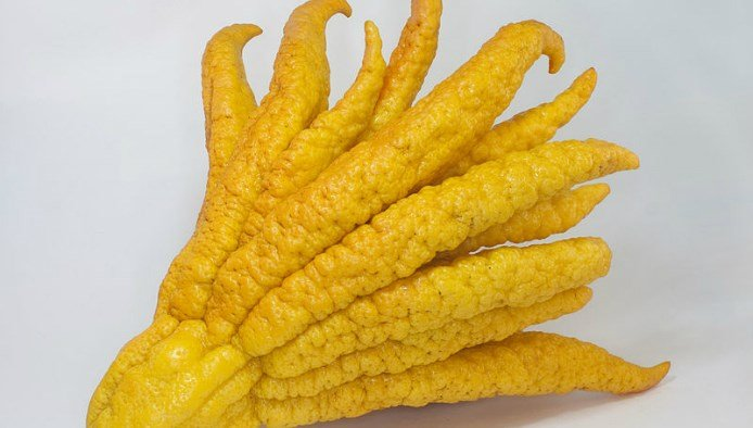 Weird Citrus Fruits 1