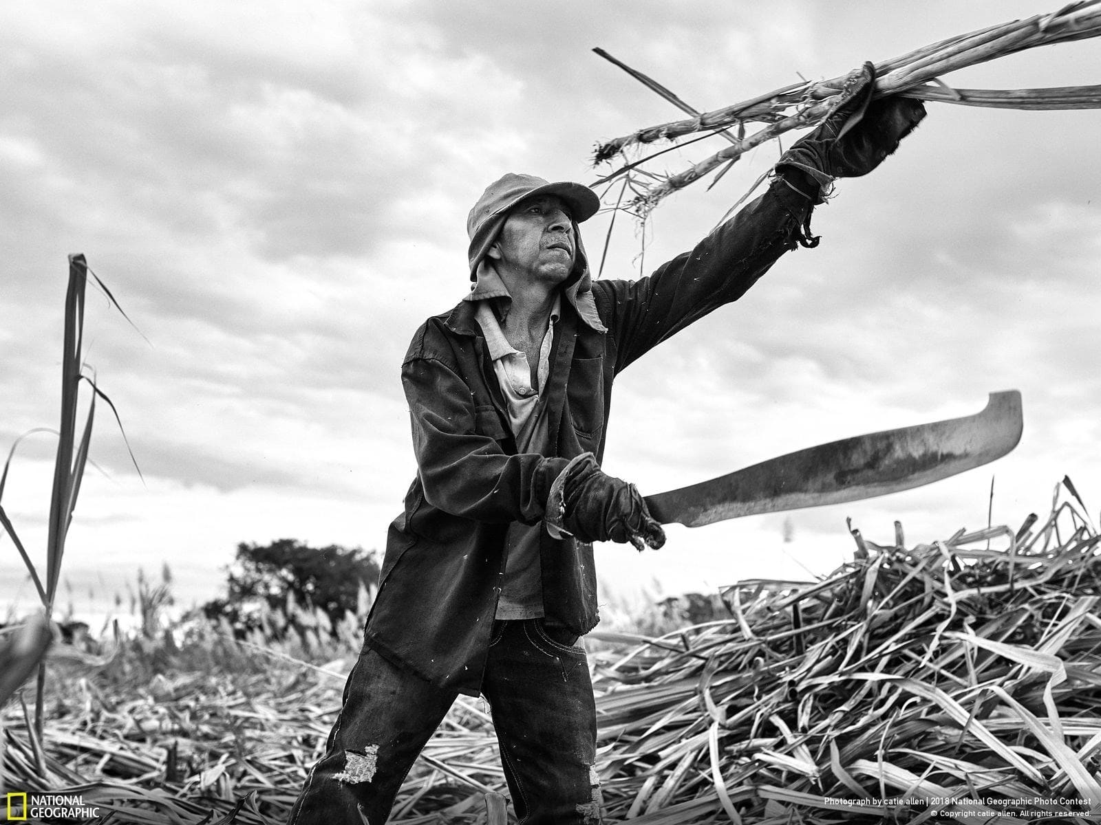 National Geographic Photo Contest 2018 | The Panela Man