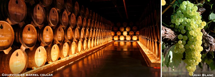 Courvoisier barrel cellar Ugni Blanc