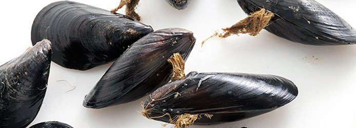 Mussels Facts | Debeard Mussels