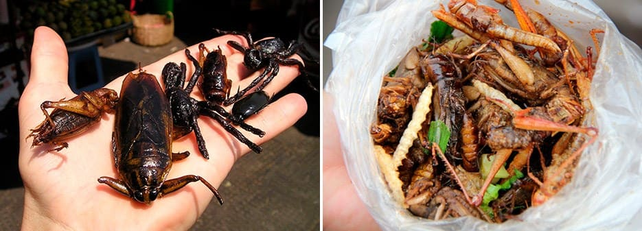 Edible Insects | Bag Bugs