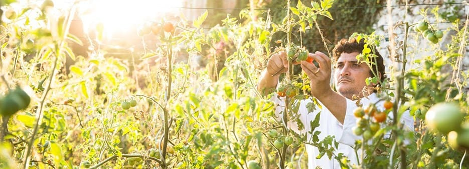 Chef Mauro Colagreco Harvesting Tomatoes in His Vegetable Garden