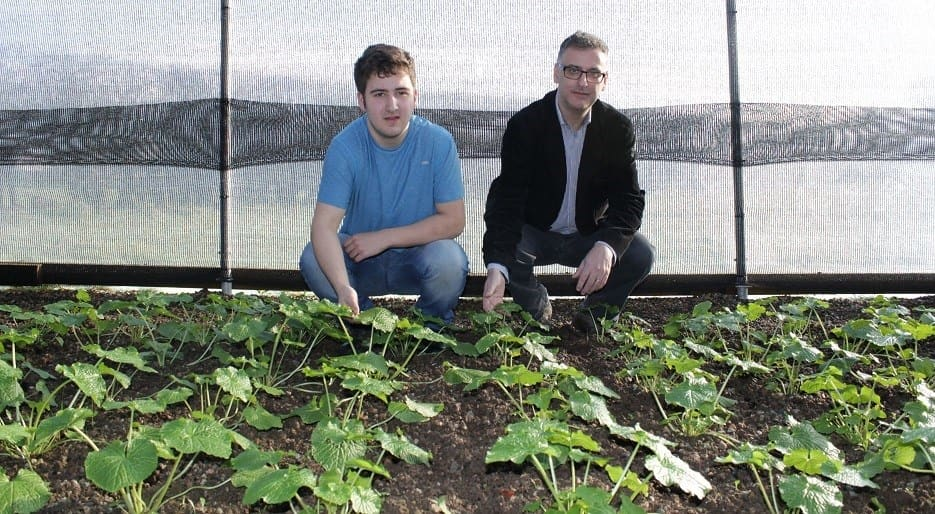 Sean Kitson with son Zak and their Wasabi crop