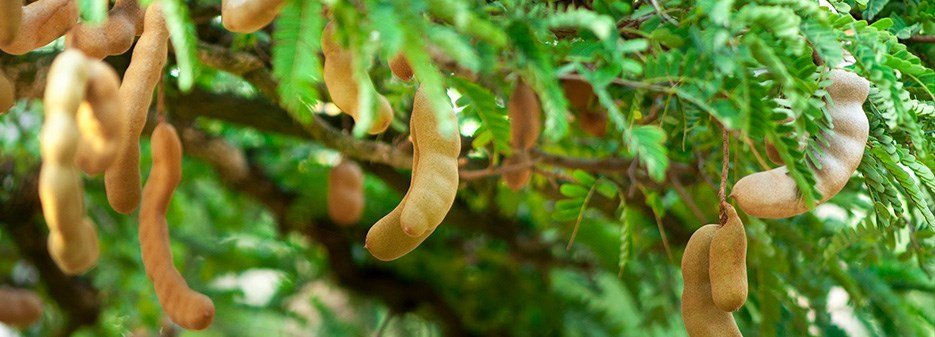 Tamarind from A to Z: 26 Things to Know