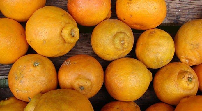 Weird Citrus Fruits 10