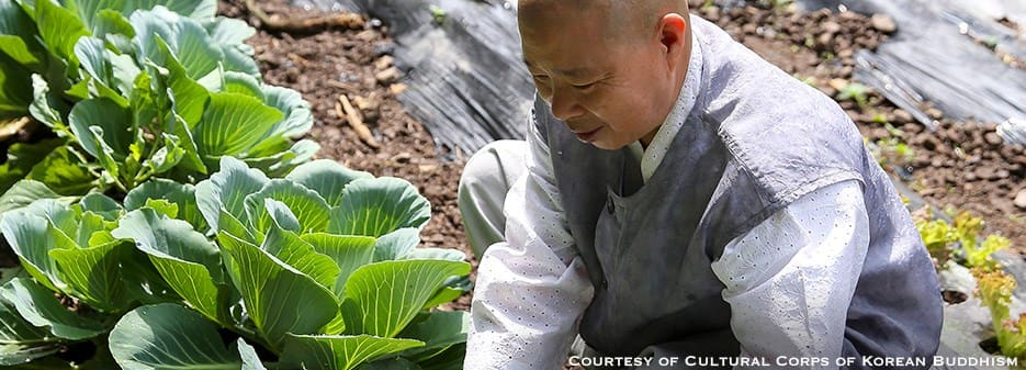 The Monk Chef Jeong Kwan in Her Vegetable Garden