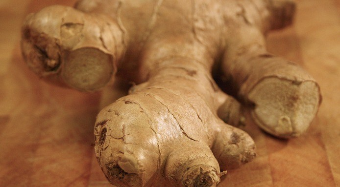 original_ginger--1-.jpg