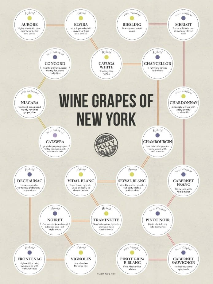 the-wine-grapes-of-new-york