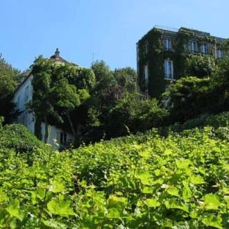 vineyard-montmartre