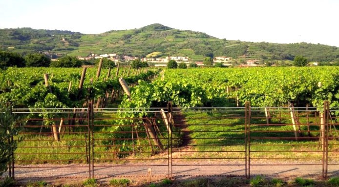 Volcanic Wines | Valsoave