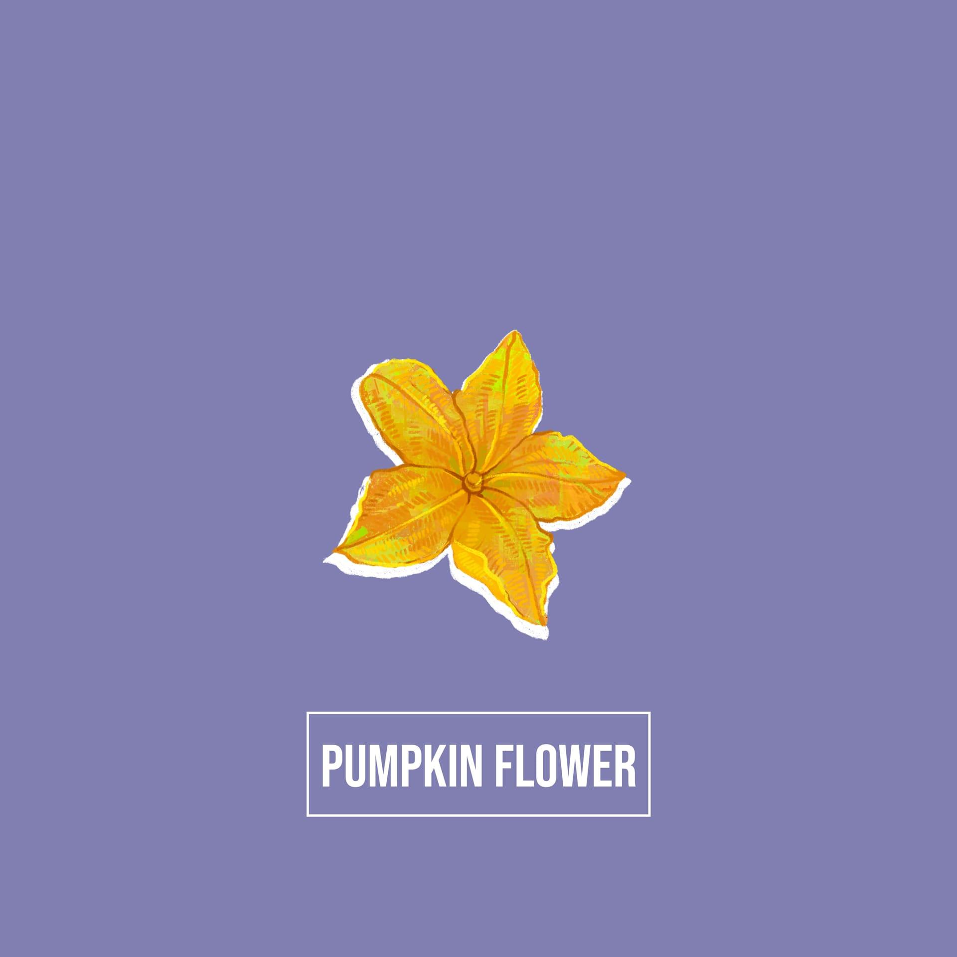 Indian biodiversity - pumpkin flower - Akash Muralidharan