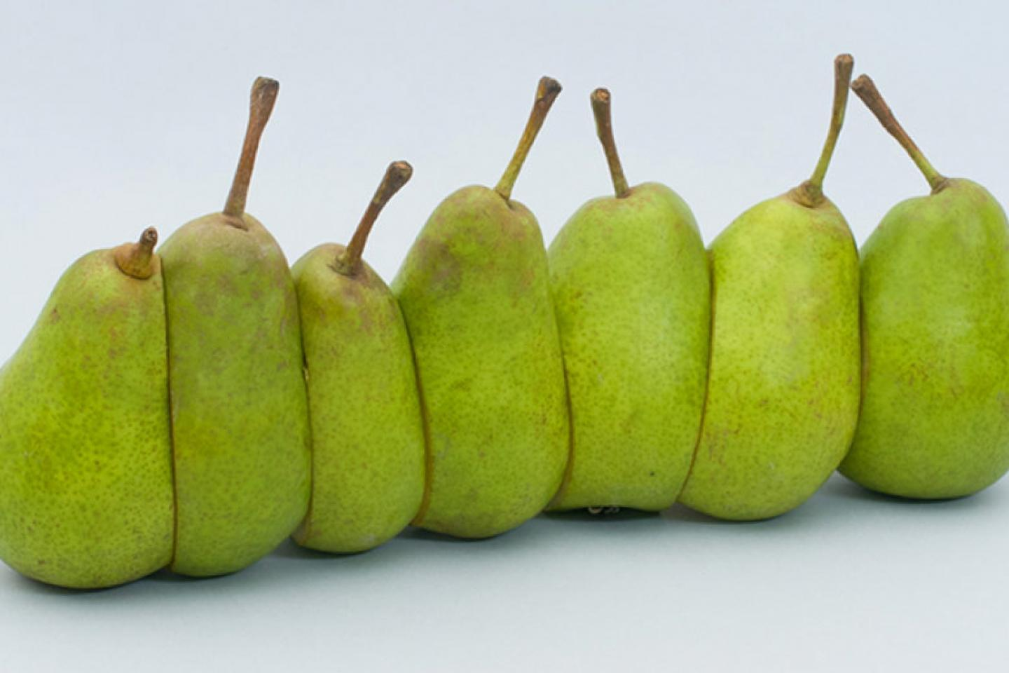 Pears from Florent Tanet