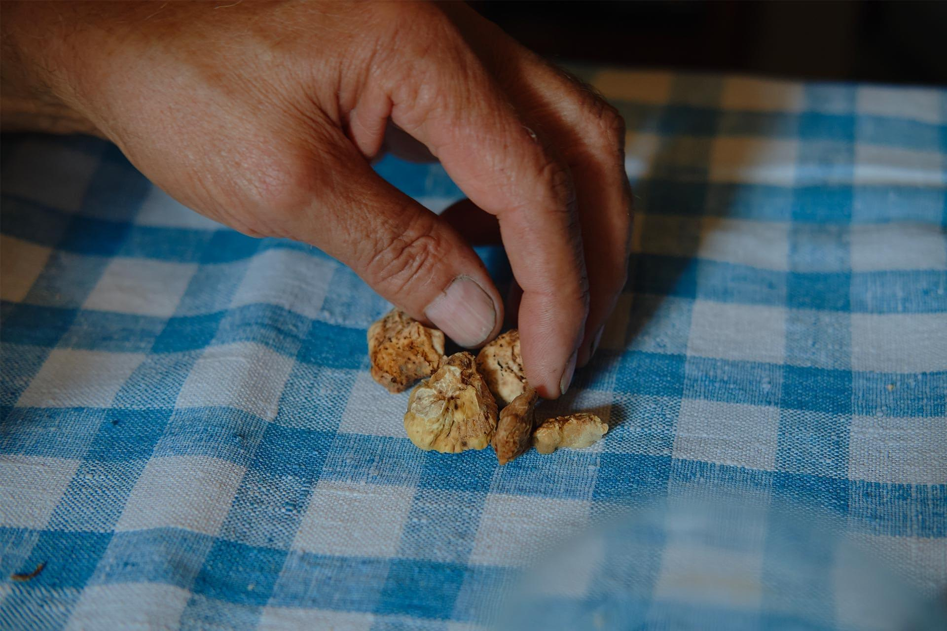 Man touching some small truffle on a table