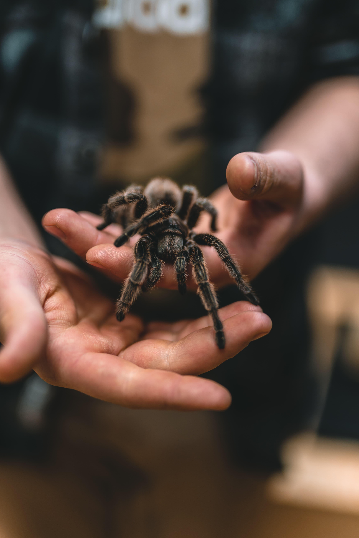 tarantula-philip-lansing-unsplash