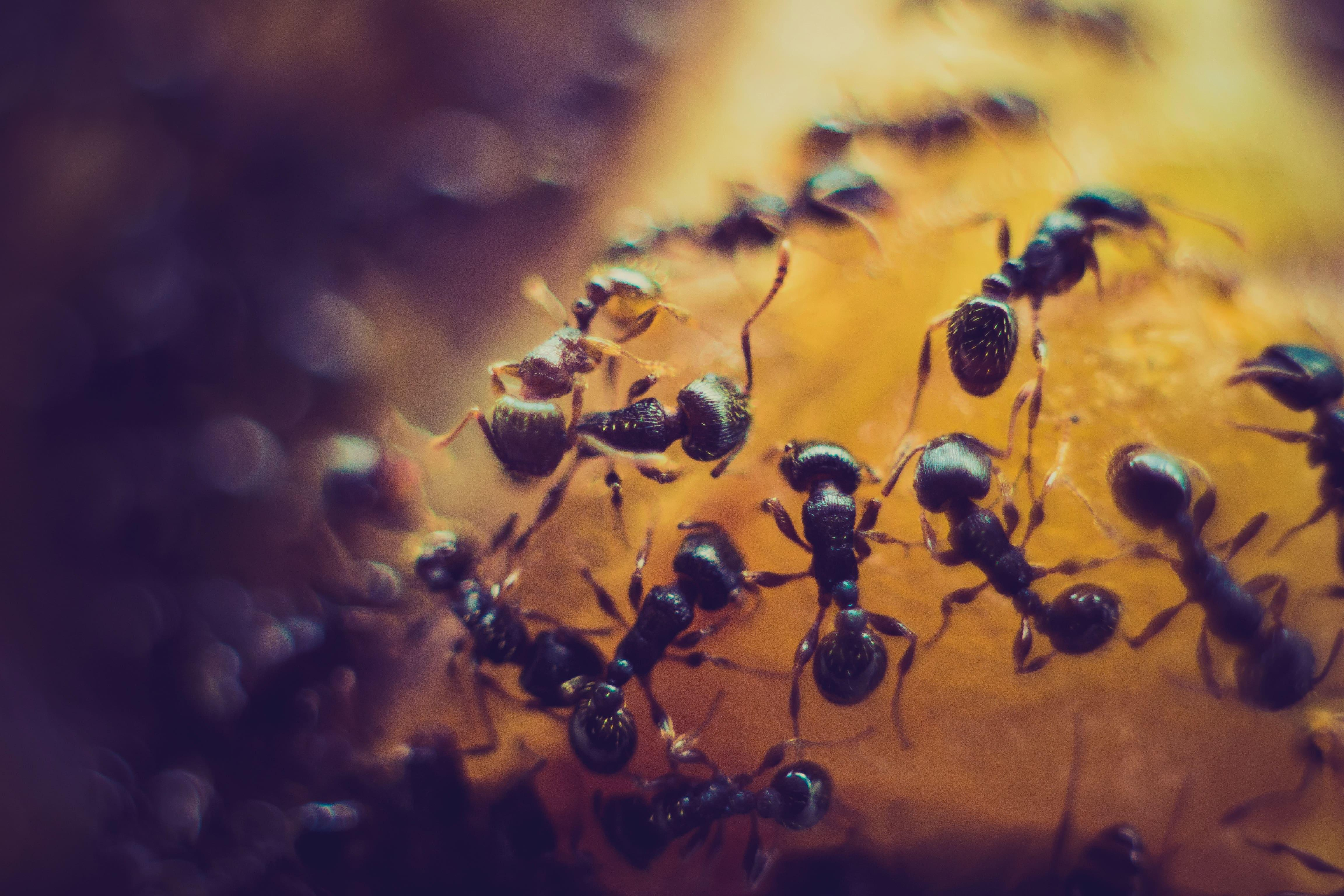 group-of-ants