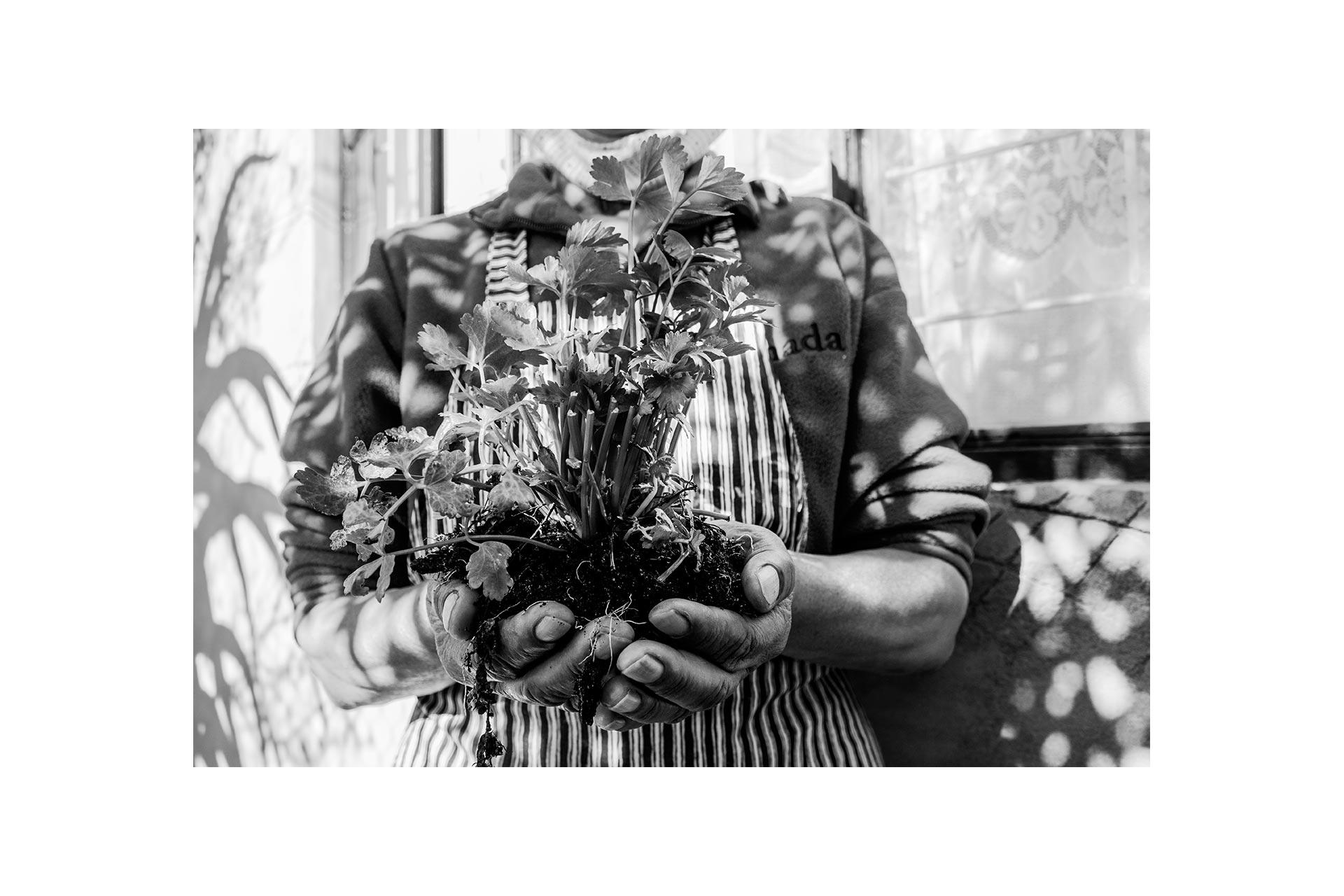 Lady holding a plant