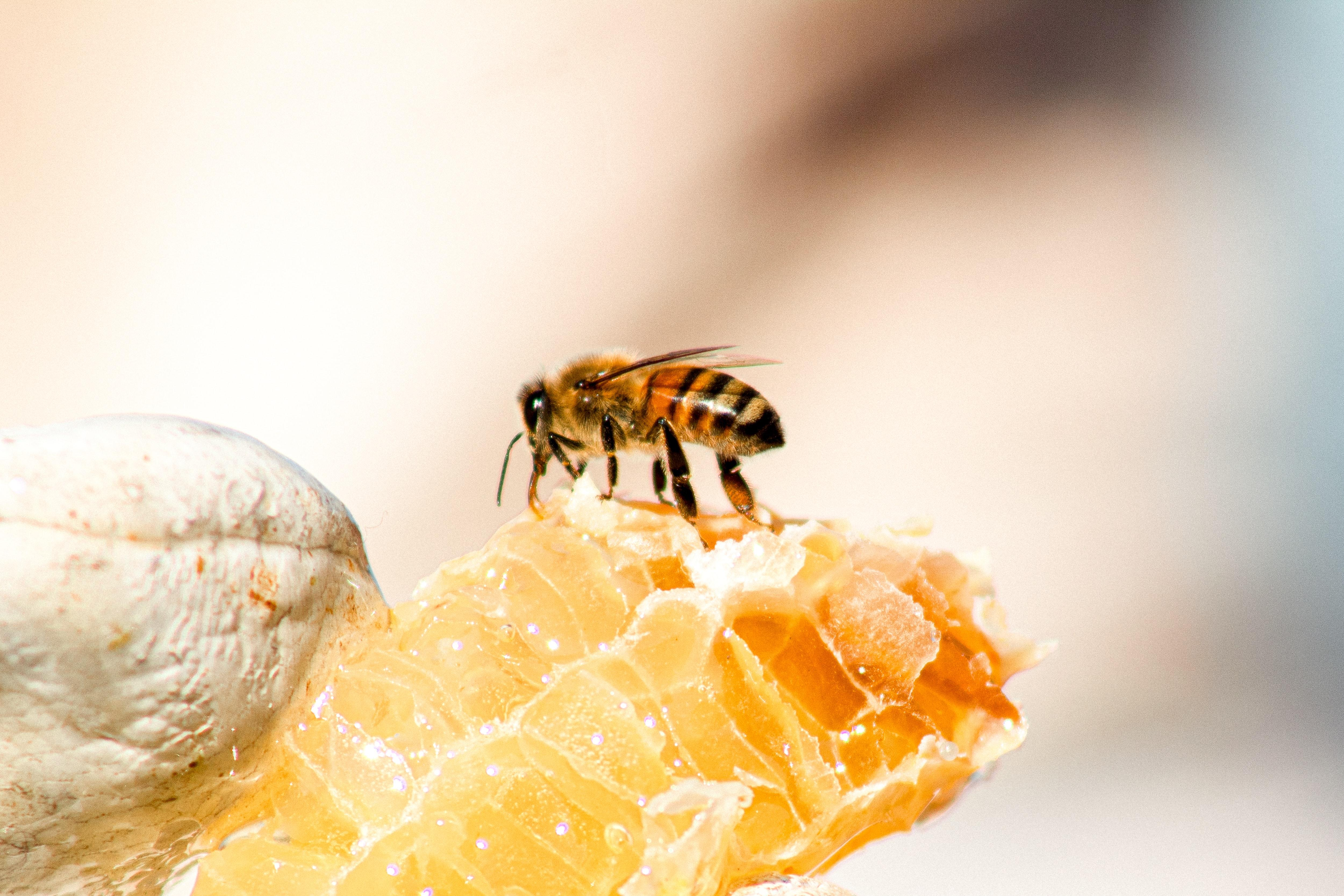 honeycomb-honey-bee-meggyn-pomerlau