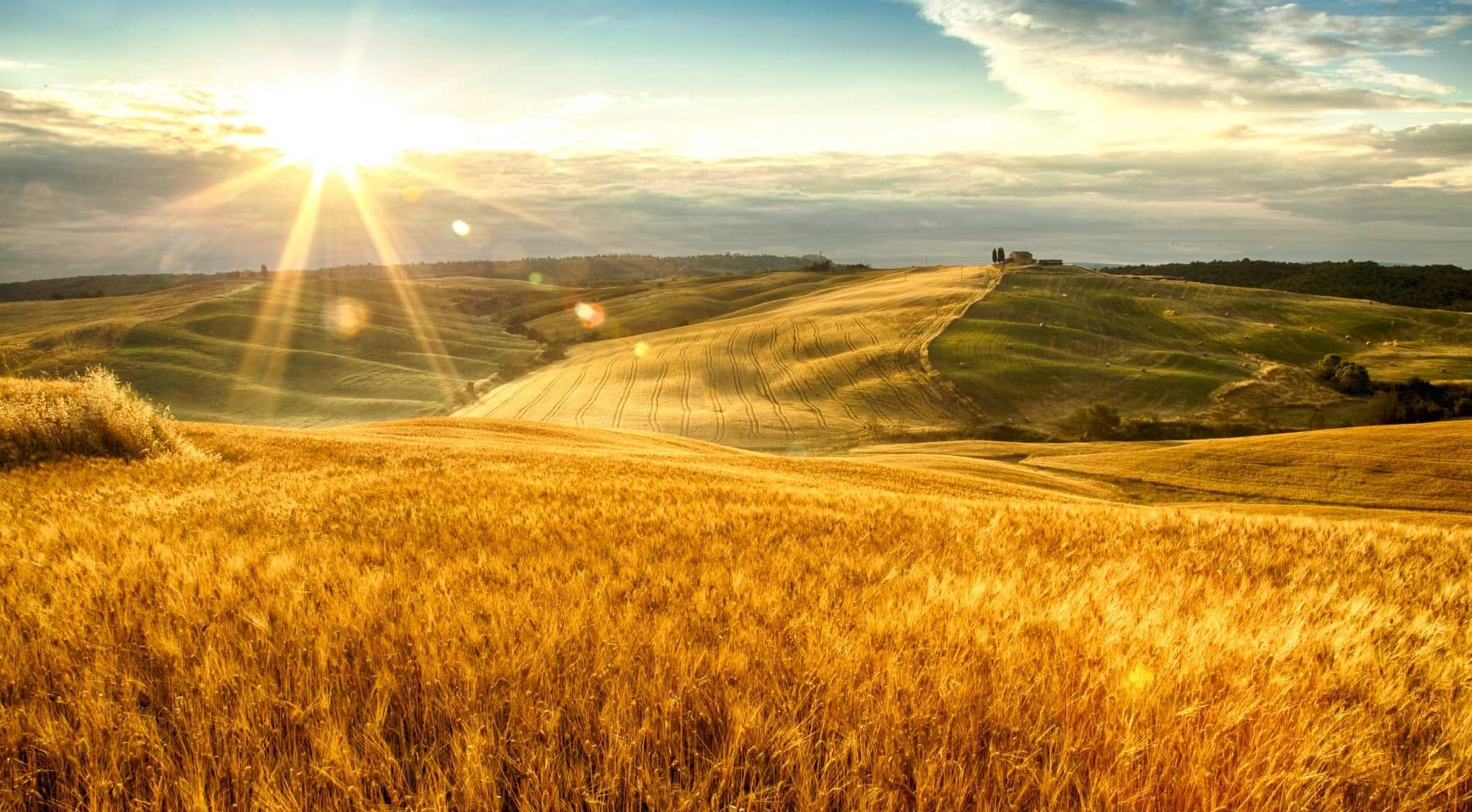 original_001-tuscan-fields-finedininglovers.jpg
