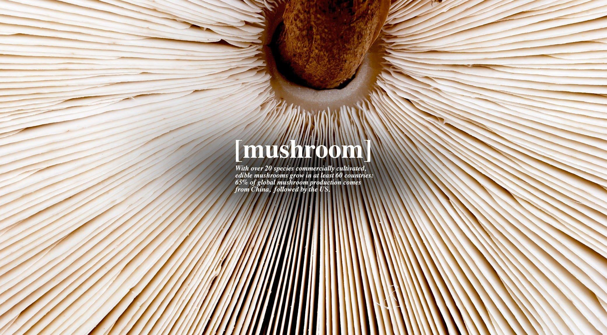 original_007-mushroom-2-finedininglovers.jpg