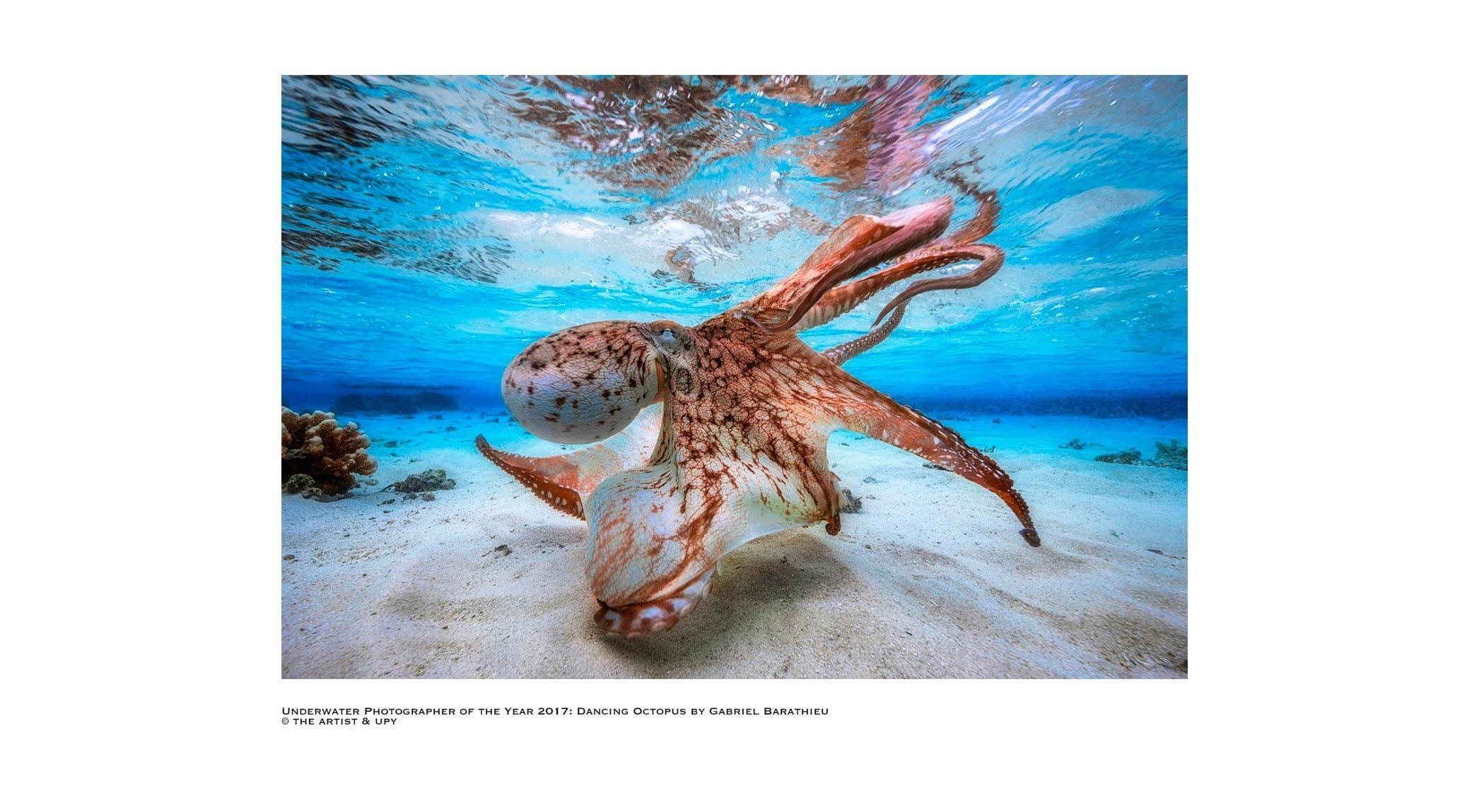 original_01-Underwater-Photographer-Year-2017.jpg