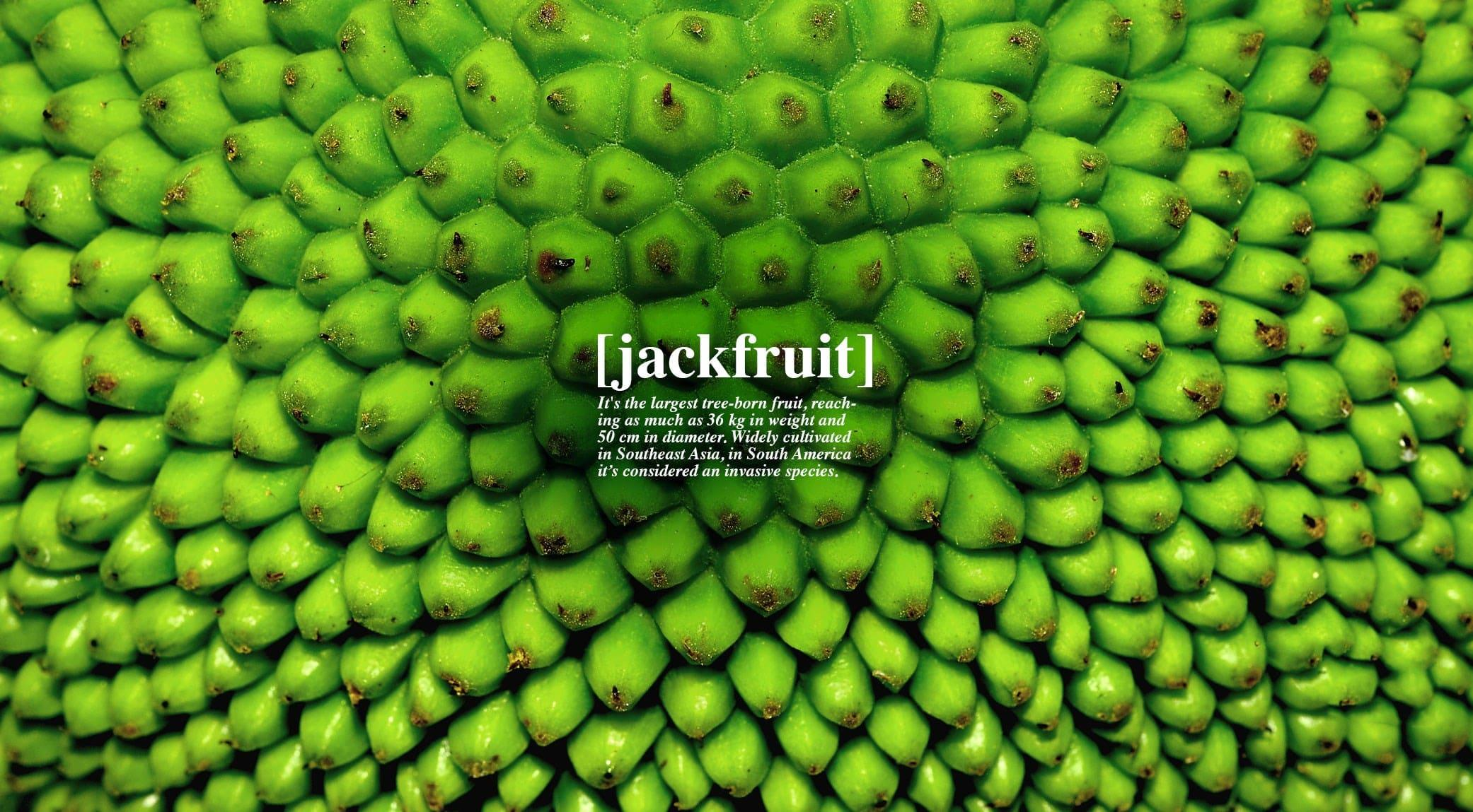 original_011-jack-fruit-finedininglovers.jpg