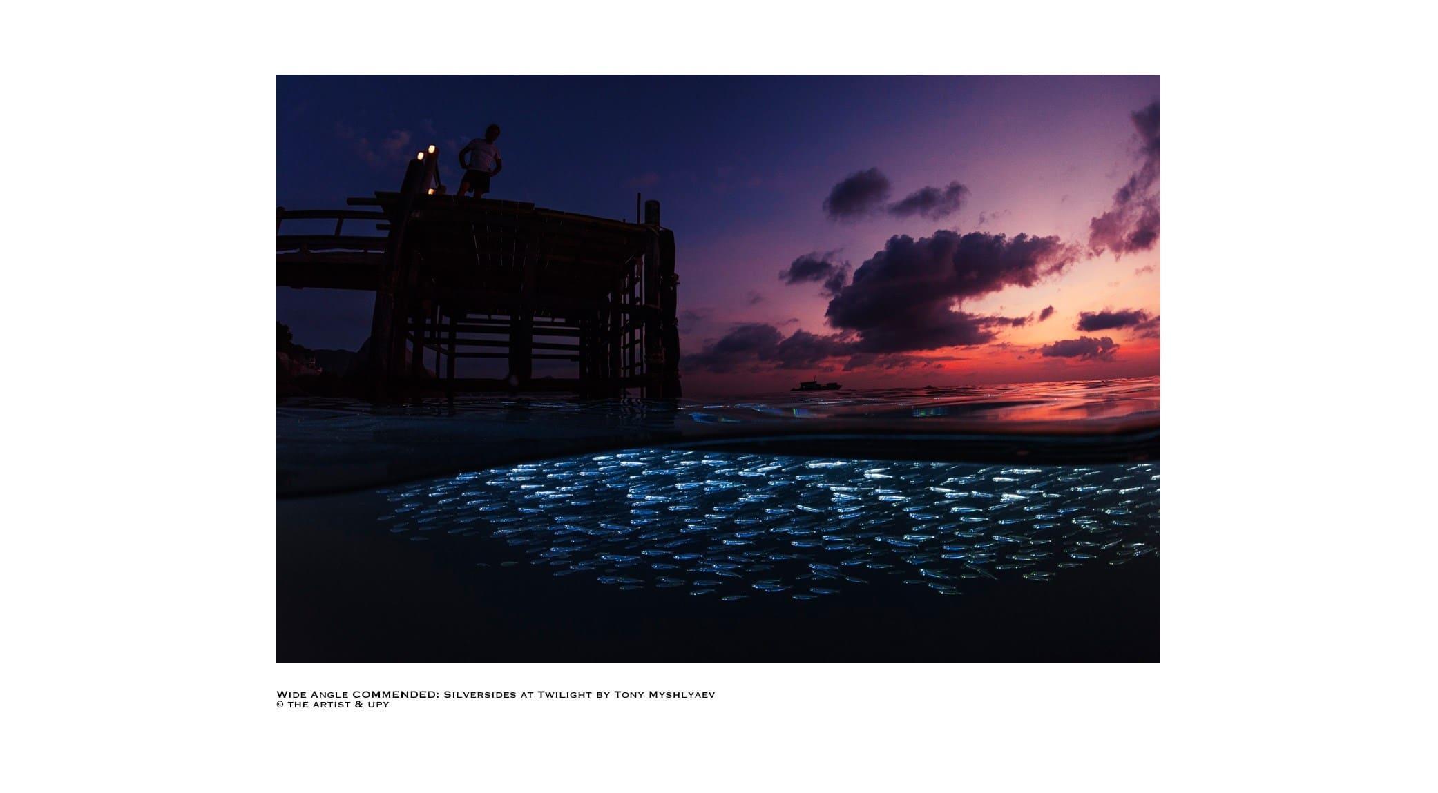 original_04-Underwater-Photographer-Year-2017.jpg