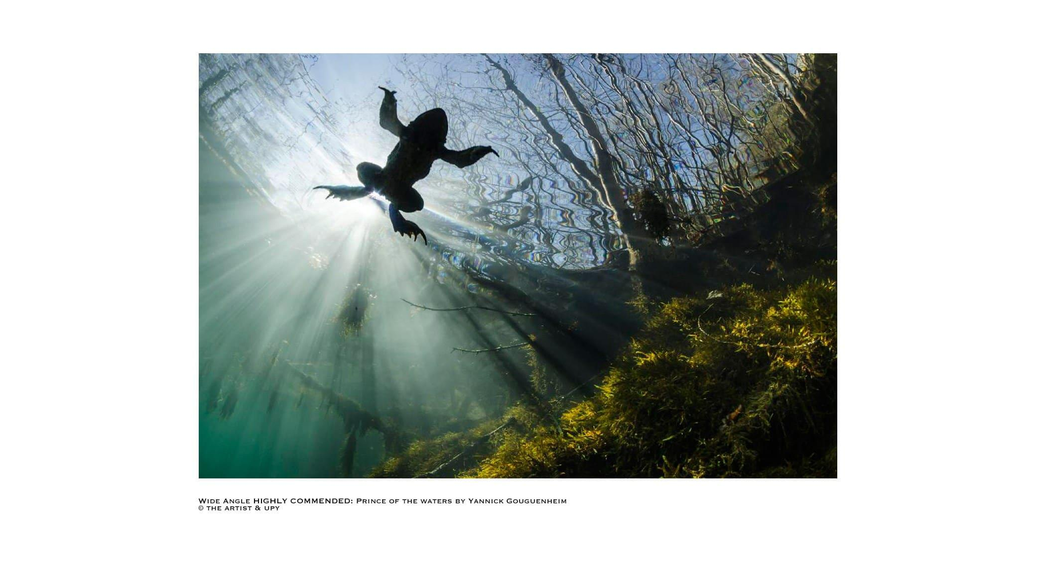 Underwater Photographer Year 2017