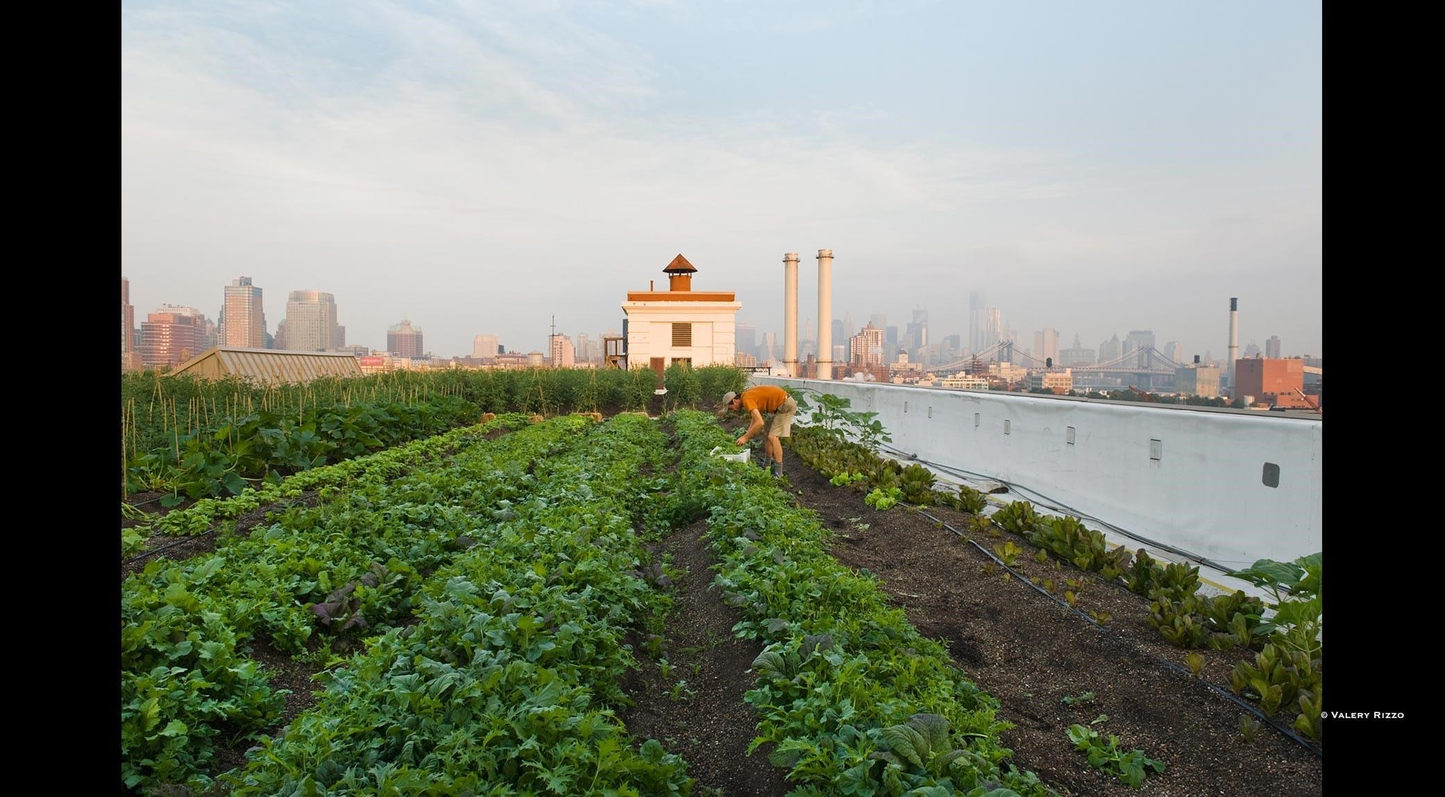 Brooklyn Urban Farming