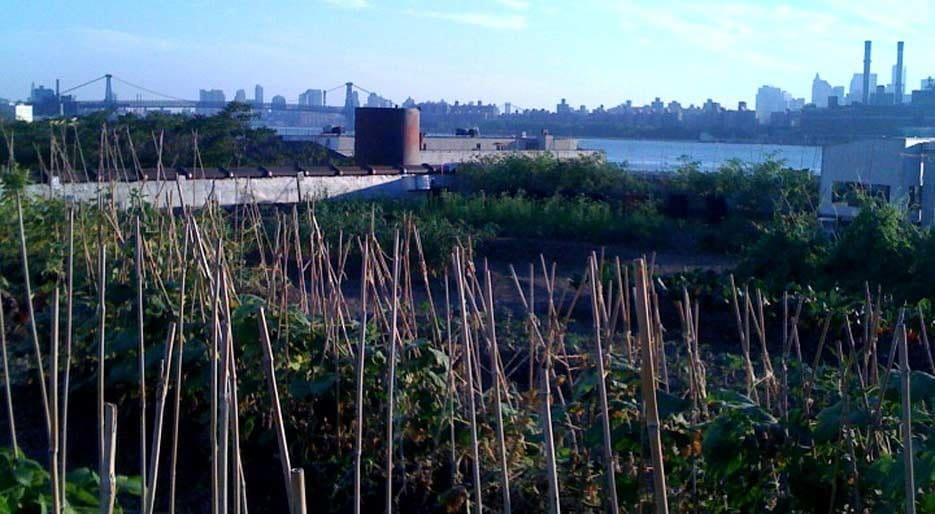 original_FDL-028-GP03-Eagle-Street-rooftop-farm-8.jpg