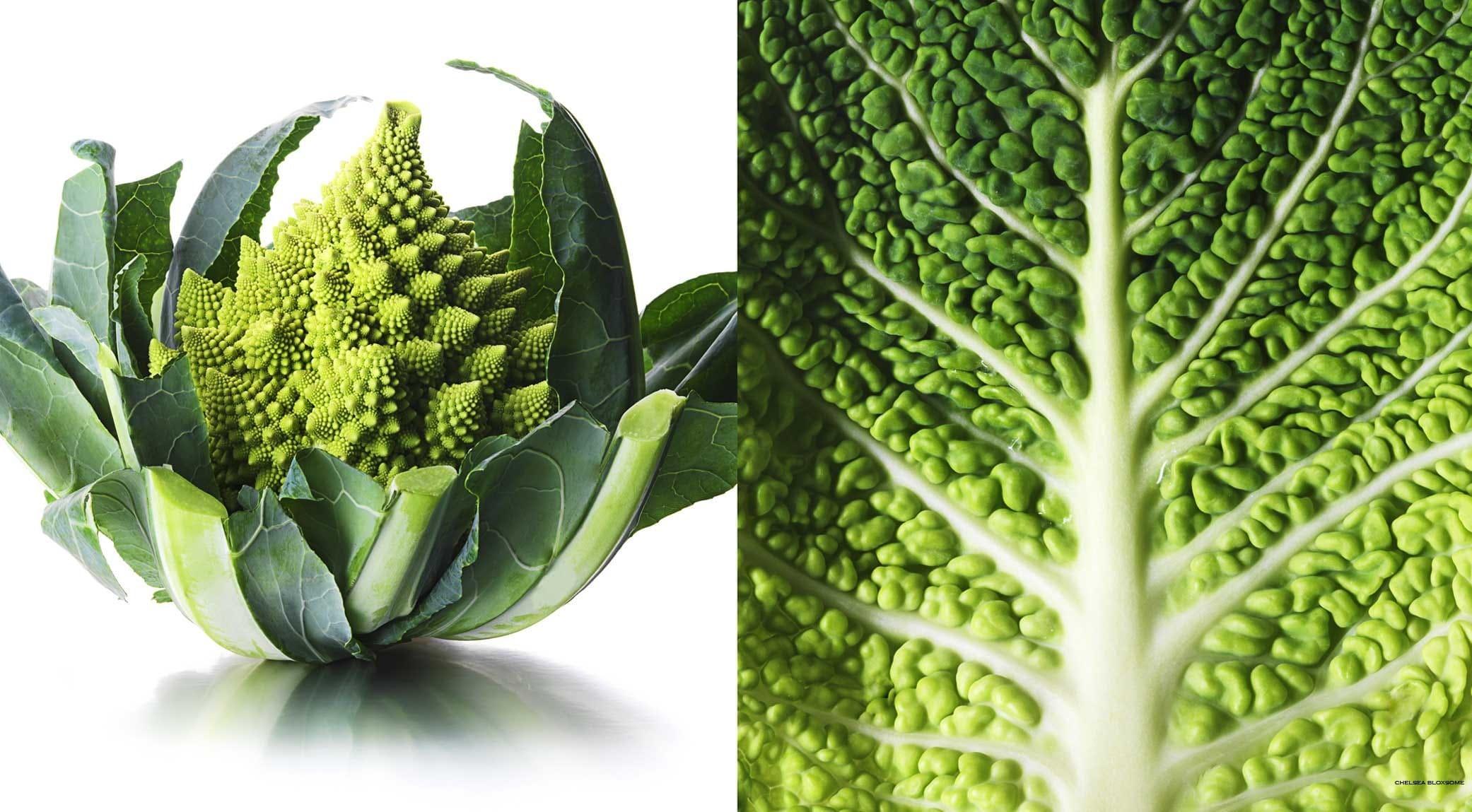 original_cabbages.jpg