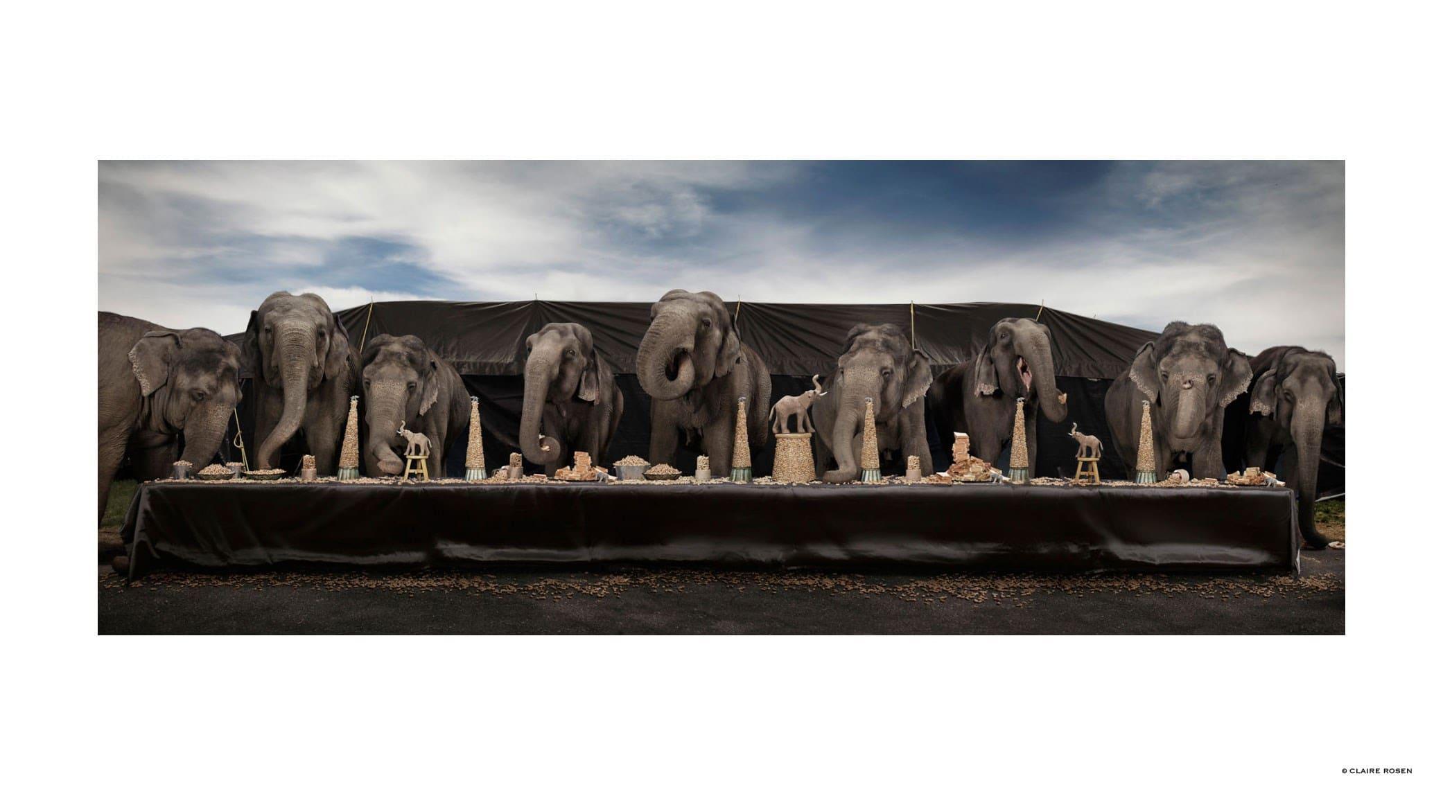 original_elephants-claire-rosen-finedininglovers.jpg