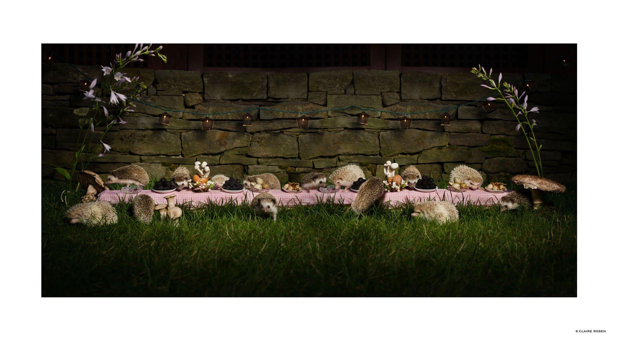 original_hedgehog-claire-rosen-finedininglovers.jpg