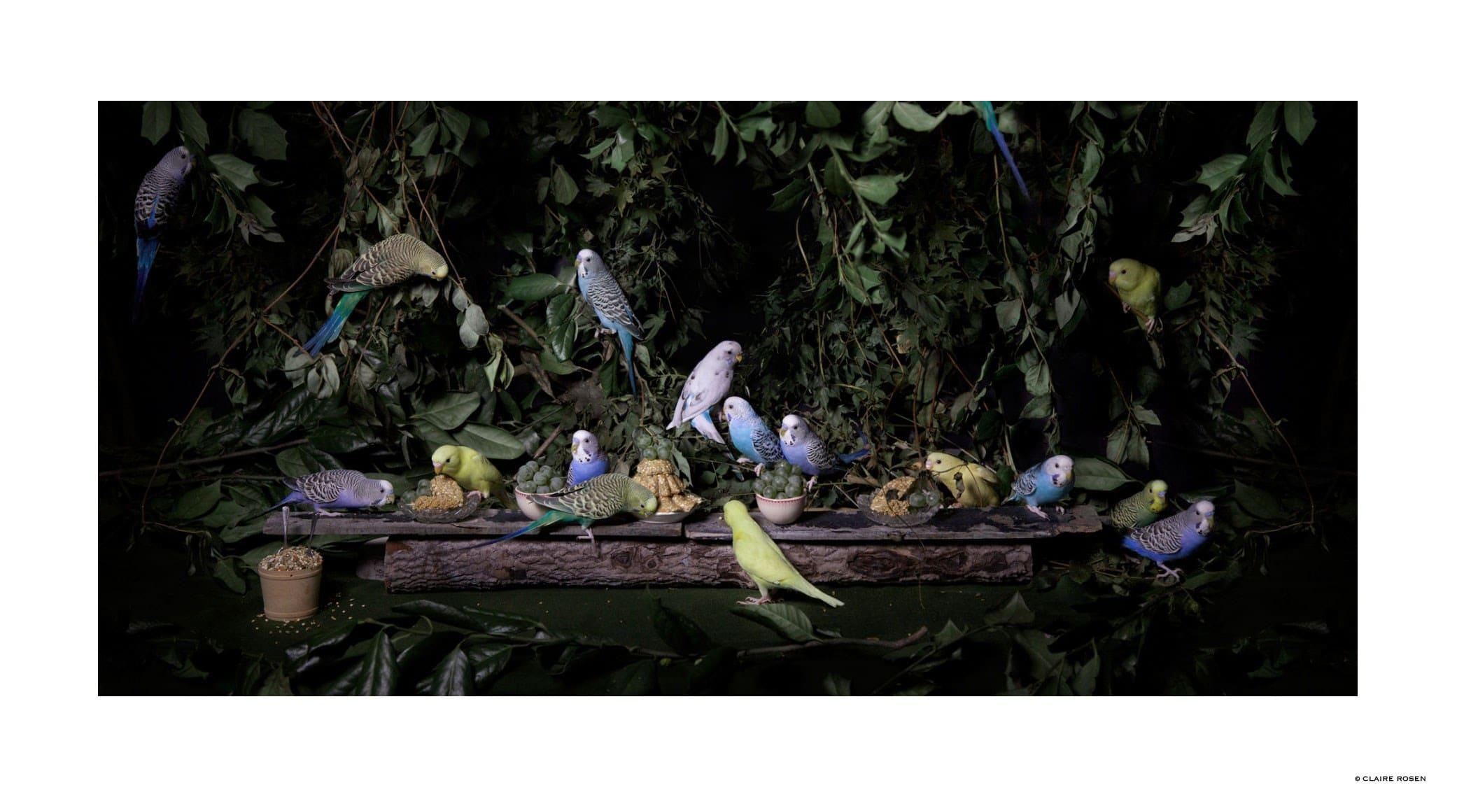original_parakeets-claire-rosen-finedininglovers.jpg