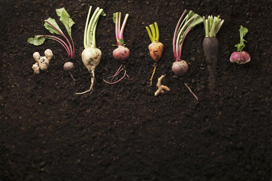 Underground Vegetables Names With Pictures